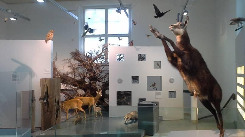 Naturkundemuseum Winterthur